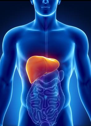 Fettleber (Steatosis hepatis) » Info-Seite - medikamente-per-klick