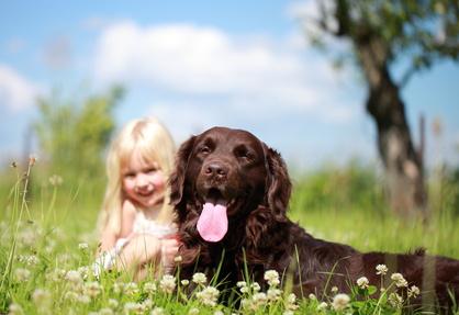 Wurmbefall beim Hund