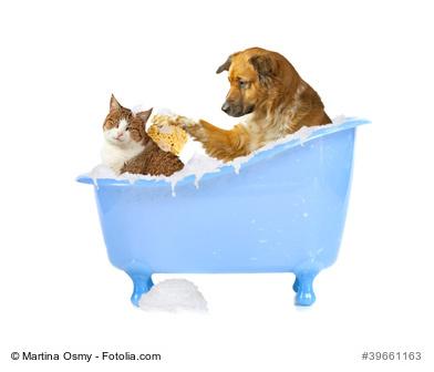 Hund und Katze in der Badewanne