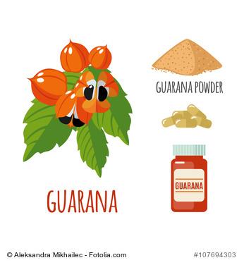 Zeichnung der Guaraná-Pflanze