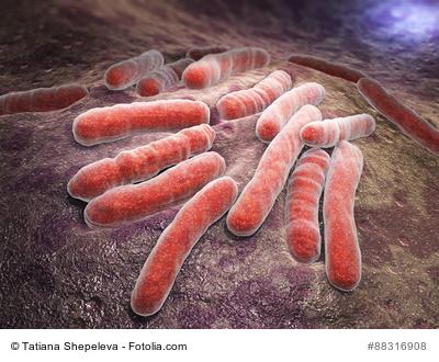 Mykobakterien (Mycobacterium tuberculosis)