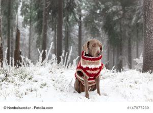 Hund im Winter