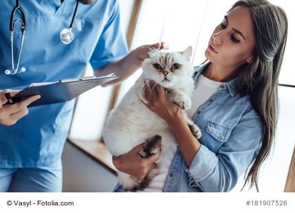 Katze in der Tierklinik
