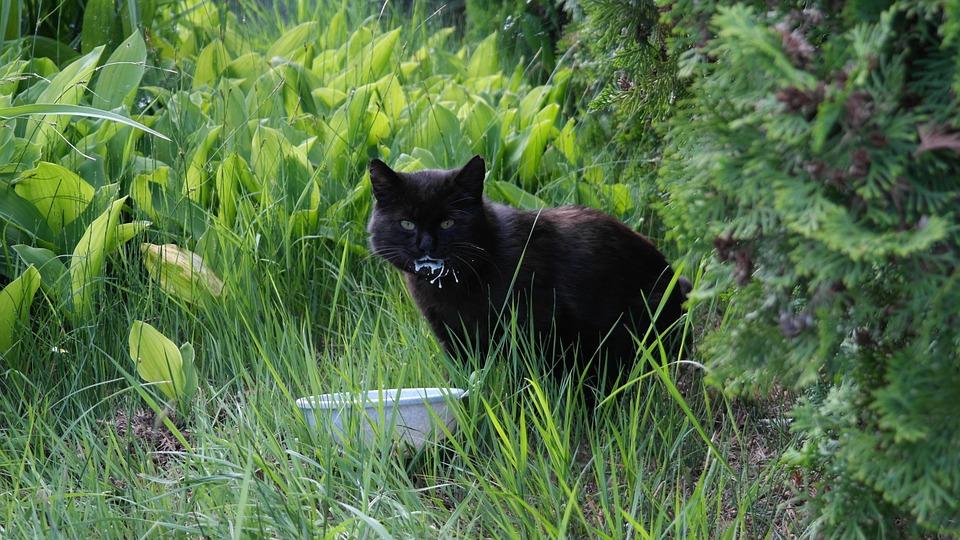 Katze am Futternapf