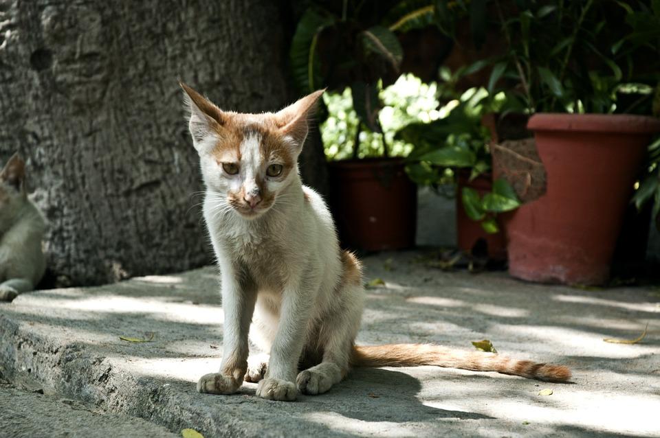 Katze abgemagert