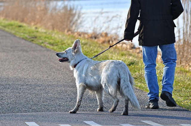 Spaziergang mit Hund