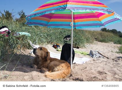 Hund und Sonne