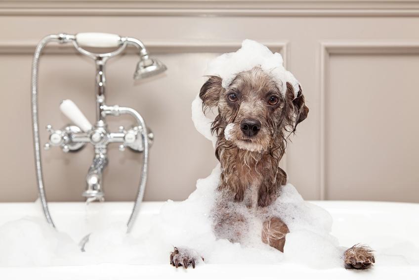 Hund nimmt Bad