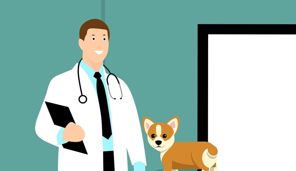 Tierarzt mit Hund