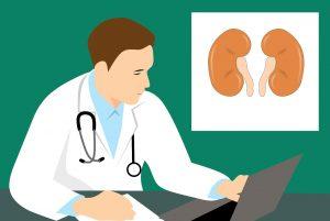 Niere und Harnbildung