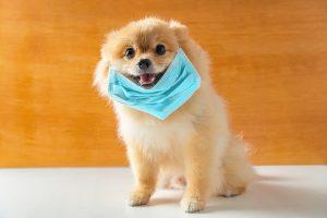 Coronaviren bei Haustieren?