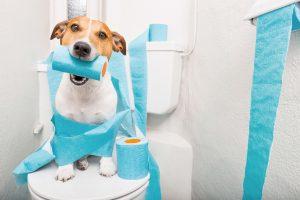Blasenschwäche bei Hunden