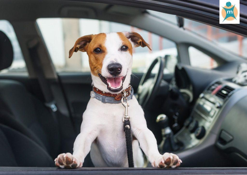 Autofahrt mit dem Hund