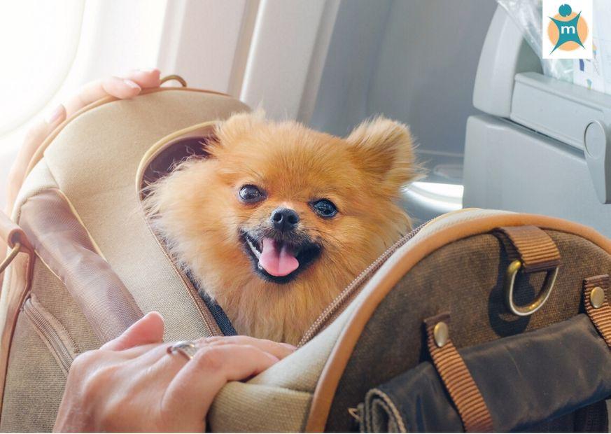 Reisen mit Flugzeug und Hund