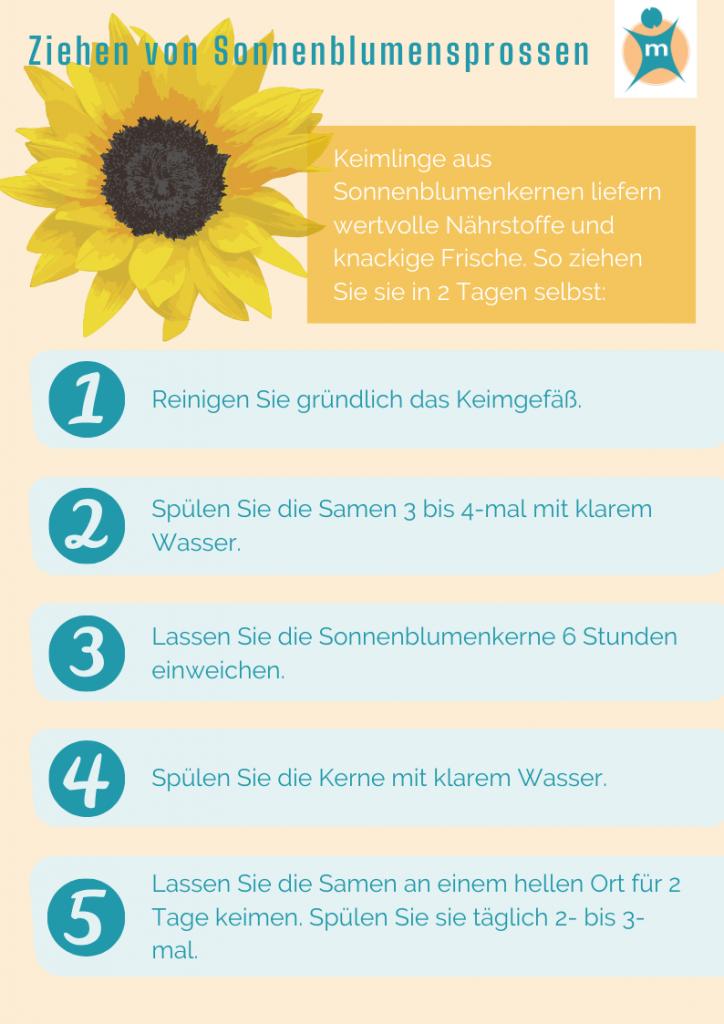 Sonnenblumenkerne keimen lassen