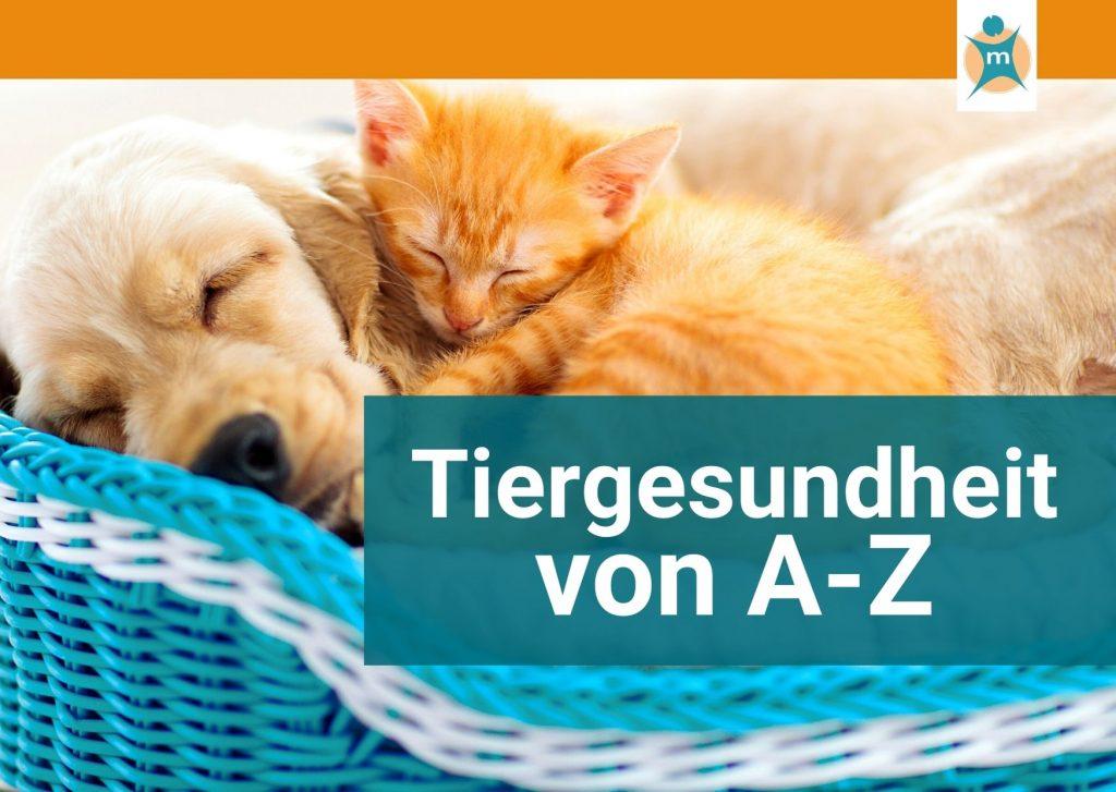 Tiergesundheit von A bis Z