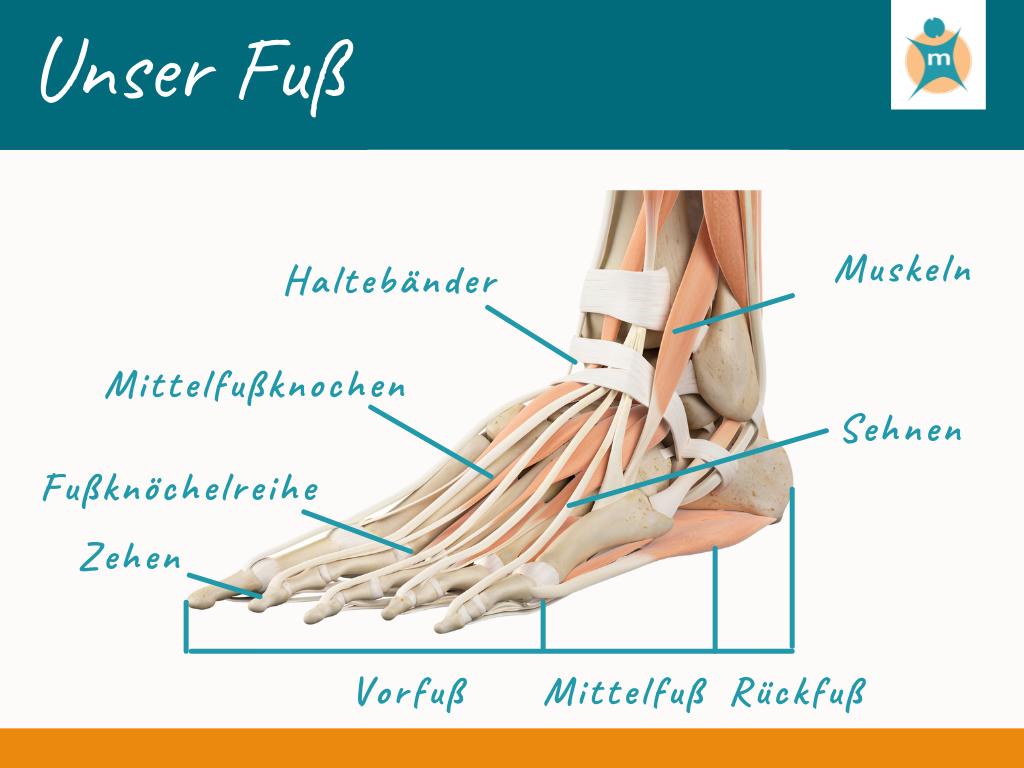 Unser Fuß