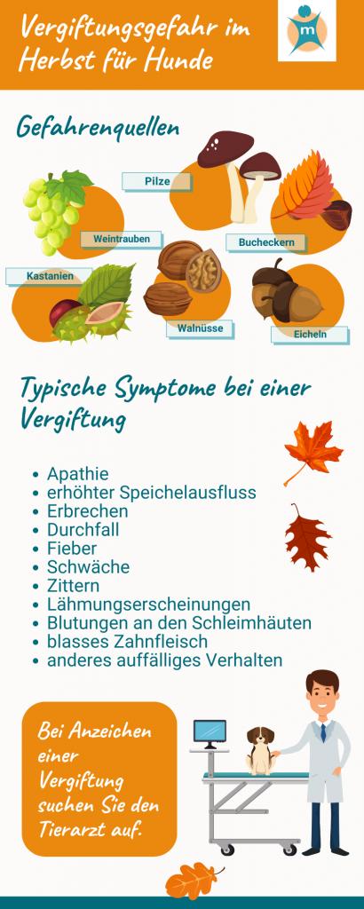 Vergiftungsgefahr im Herbst